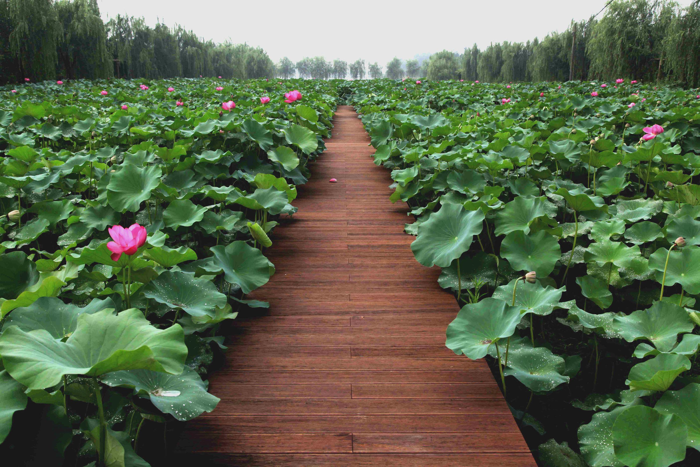 箐箐庄园,专注打造农业休闲观光园,致力于绿色生态农产品开发,我们图片
