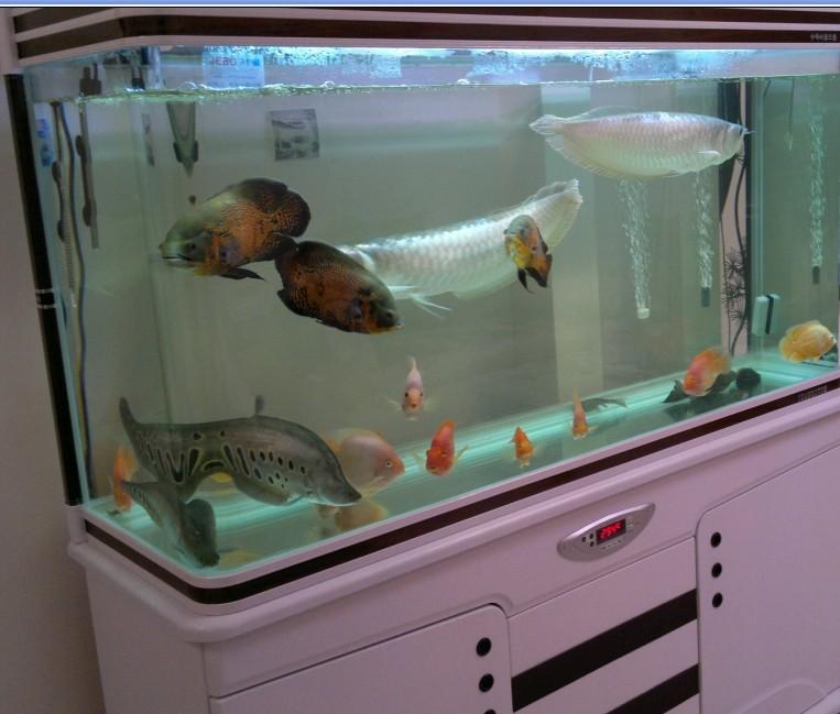银龙鱼吃什么_